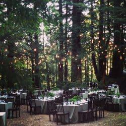 חתונות ביער